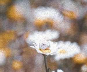 צילומי פרחים