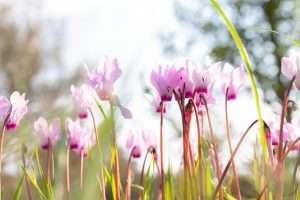 צילומי פרחים למכירה