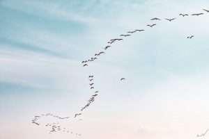 ציפורים, שמיים, מעוף