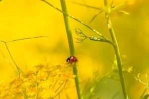 מושית, פרת משה רבינו, חיפושית